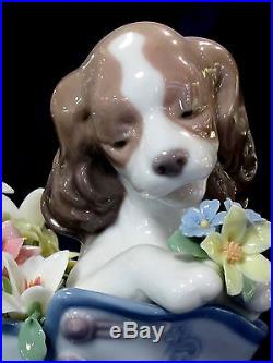 Lladro #6744 A Well Heeled Puppy Bnib Dog Flower Shoe Arge Bargain $220 Off F/sh