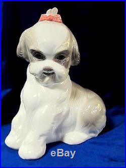 Nao By Lladro #1654 Pampered Shih-tzu Brand New In Box Cute Dog Large Save$$ F/s